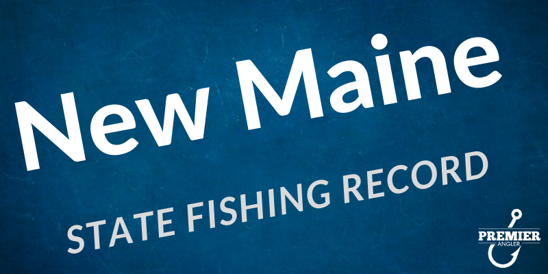 New Maine State Record Yellow Perch
