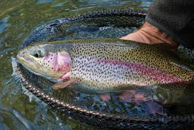 Fish of the Day_Trout Fishing West Virginia