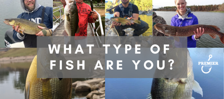 What Type of Fish are You Quiz